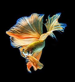 Contact fish